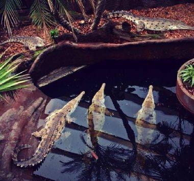 Krokodille Zoo – Eskilstrup